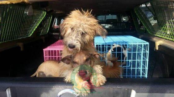 Tippi & Tappi nachdem sie aus dem Lager gerettet wurden