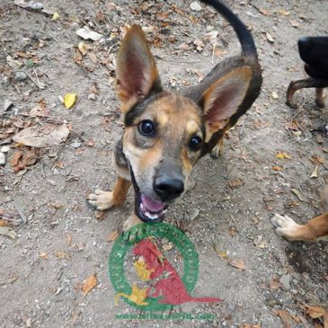 Max – Patensuchfellchen des Monats – hat liebe Paten gefunden